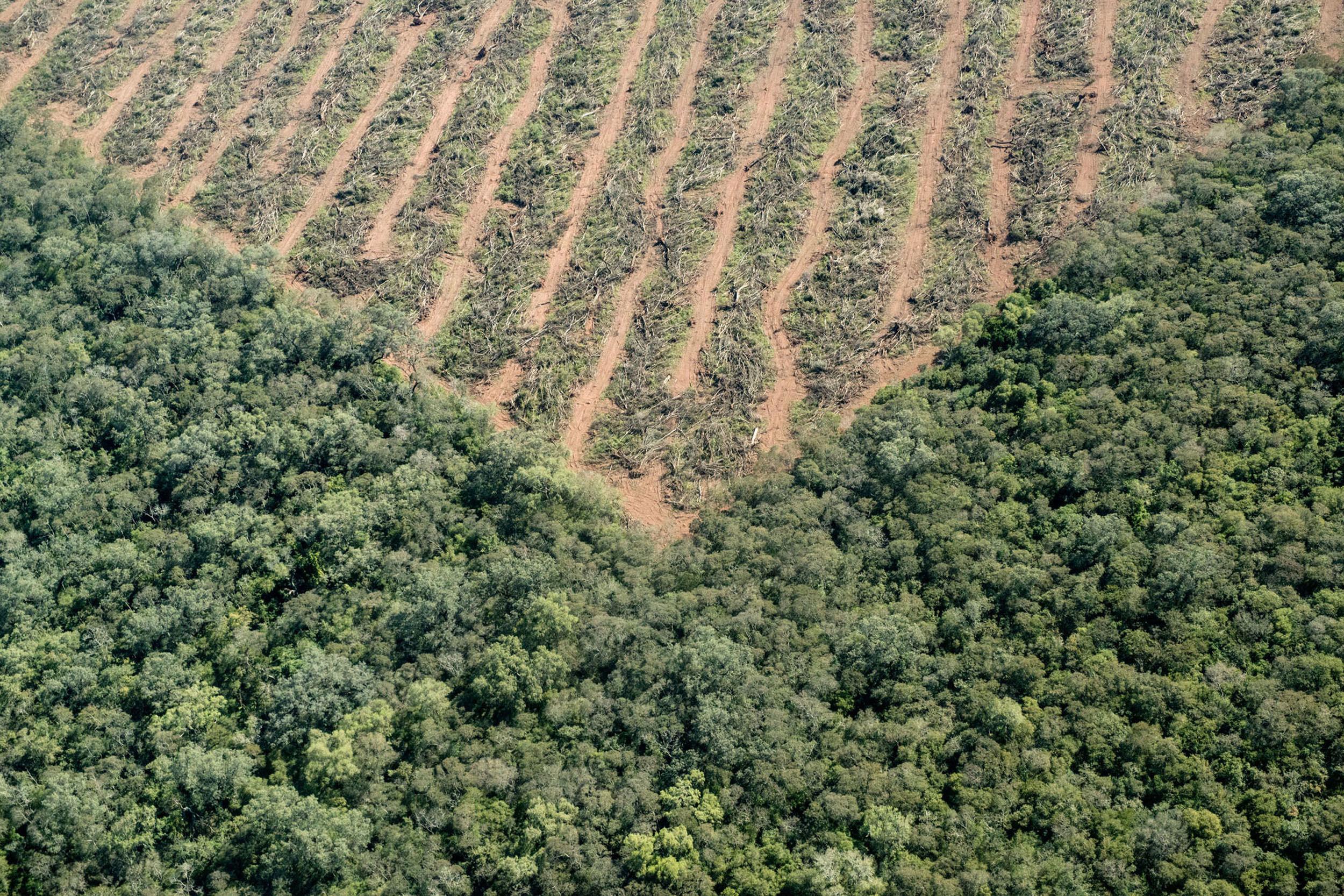 El estado de los bosques: cómo llegamos hasta aquí y cómo revertir la deforestación