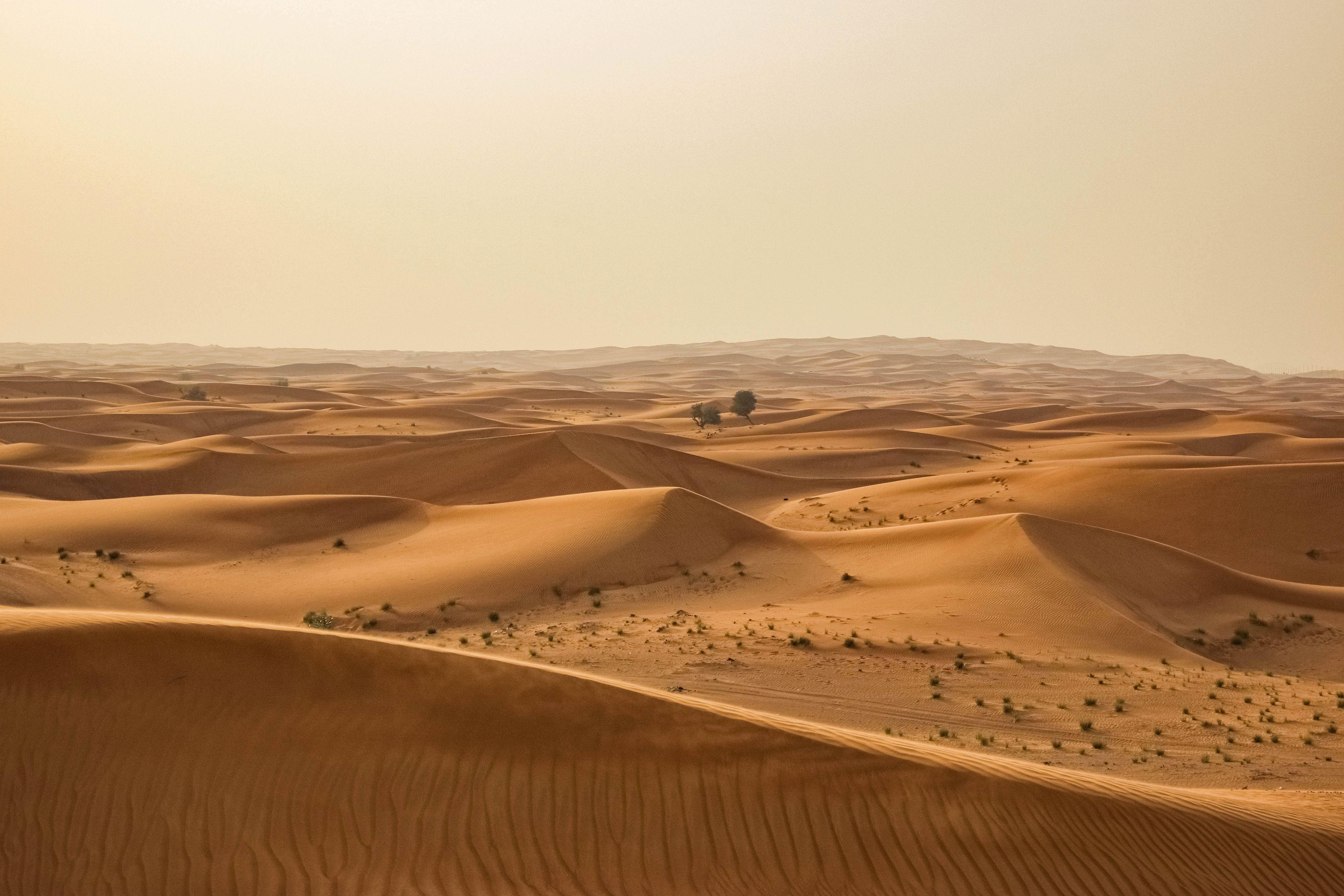 Cómo hizo la humanidad para transformar la fértil llanura del Sahara en un desierto