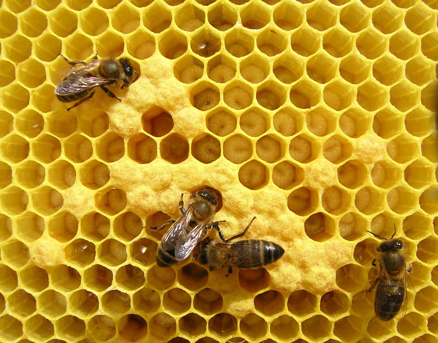 Todavía estamos a tiempo de salvar a las abejas con estas ideas
