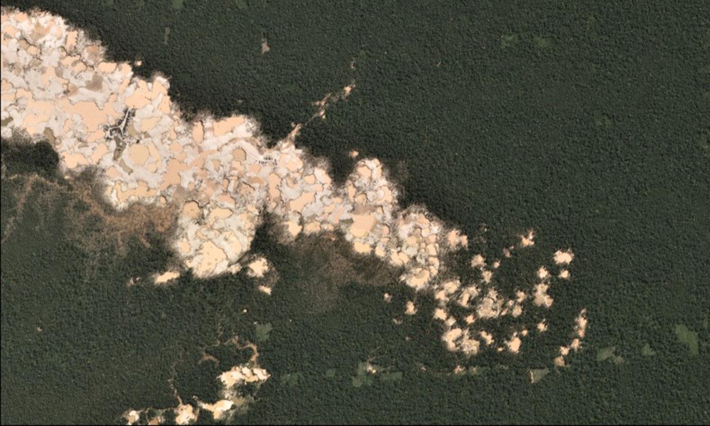 Cómo la tecnología digital ayuda a proteger los bosques