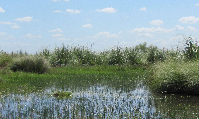Avanza la creación del parque nacional que ayudará a evitar inundaciones en la cuenca del Luján