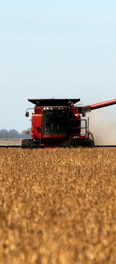 La buena cosecha que podría recoger el campo argentino por la guerra comercial que gatilló Trump