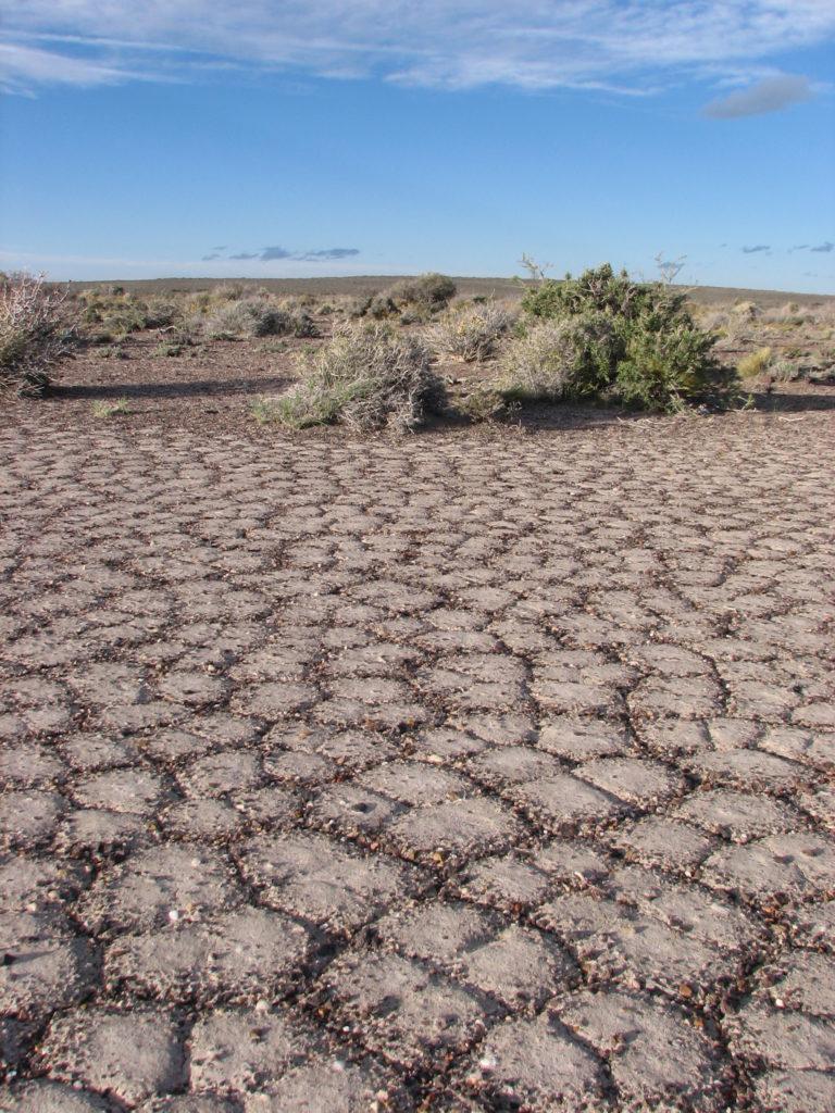 En Ingeniero Jacobacci, Río Negro, el suelo es casi desértico. Crédito: INTA Bariloche.