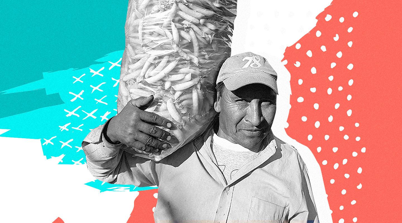 La producción sin pesticidas ni fertilizantes gana terreno: la Argentina es el segundo país con más hectáreas destinadas a alimentos orgánicos