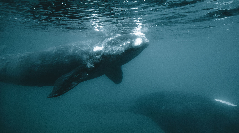Qué se podría hacer y qué no en las áreas marinas protegidas aprobadas por Diputados