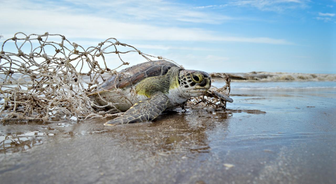La historia detrás de los 300 animales marinos que aparecieron muertos o lastimados en la costa