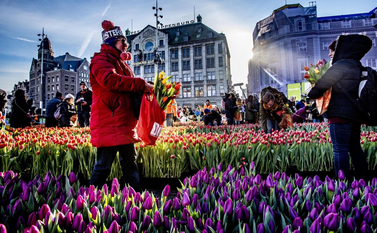La magia de los tulipanes