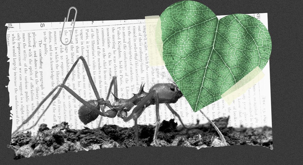 SUSTENTABLES | Por qué debemos cuidar a los insectos; Qué regalar en San Valentín; Paul McCartney y su recital ecológico