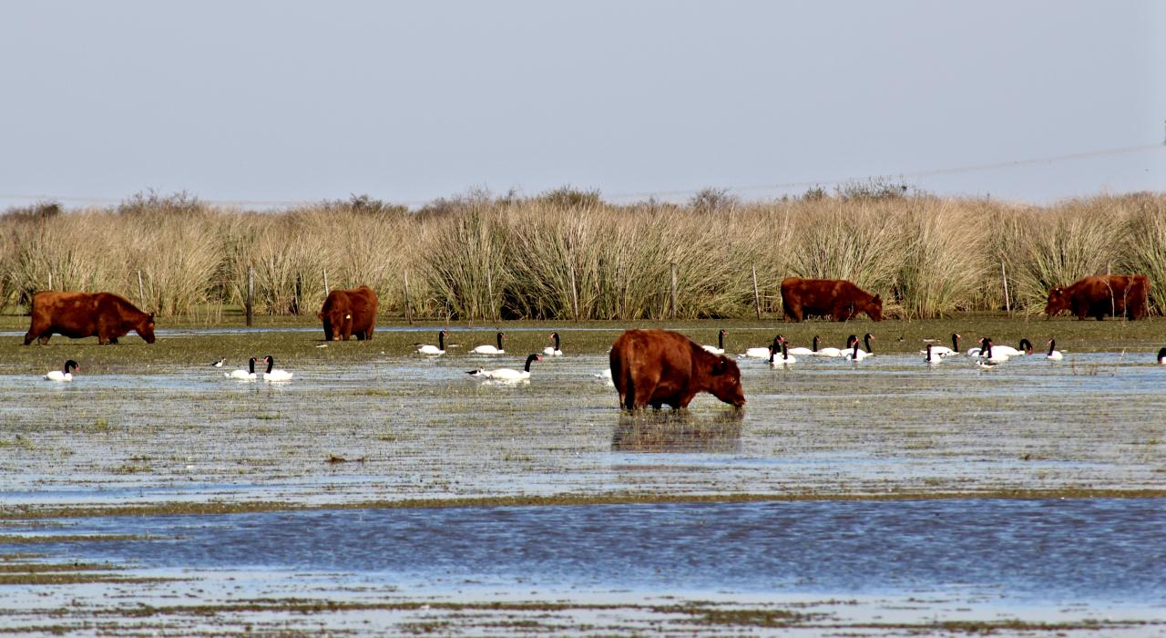 Humedales: evitan inundaciones y purifican el agua pero no hay una ley que los proteja