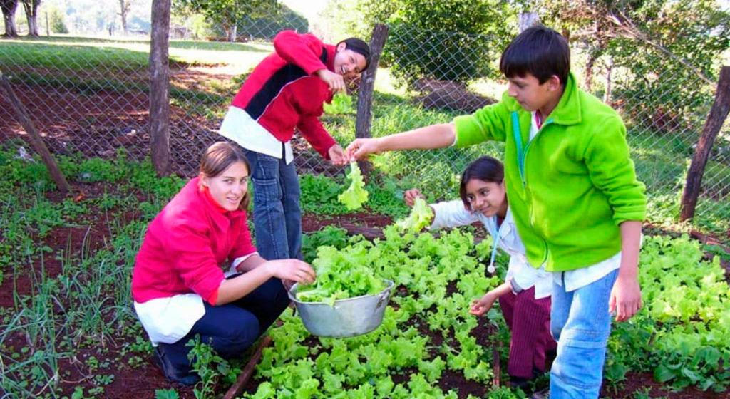 En Misiones impulsan por ley que todas las escuelas tengan huerta y los alumnos aprendan a trabajarla