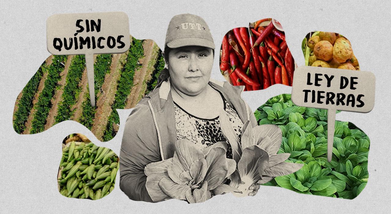 La huerta más justa del país: cómo trabajan los pequeños productores que apuestan por la agroecología