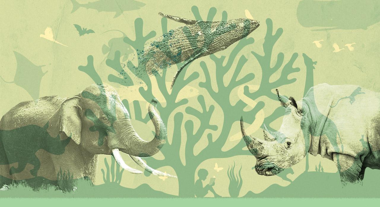 Bienvenidos a la década clave para preservar la vida en la Tierra
