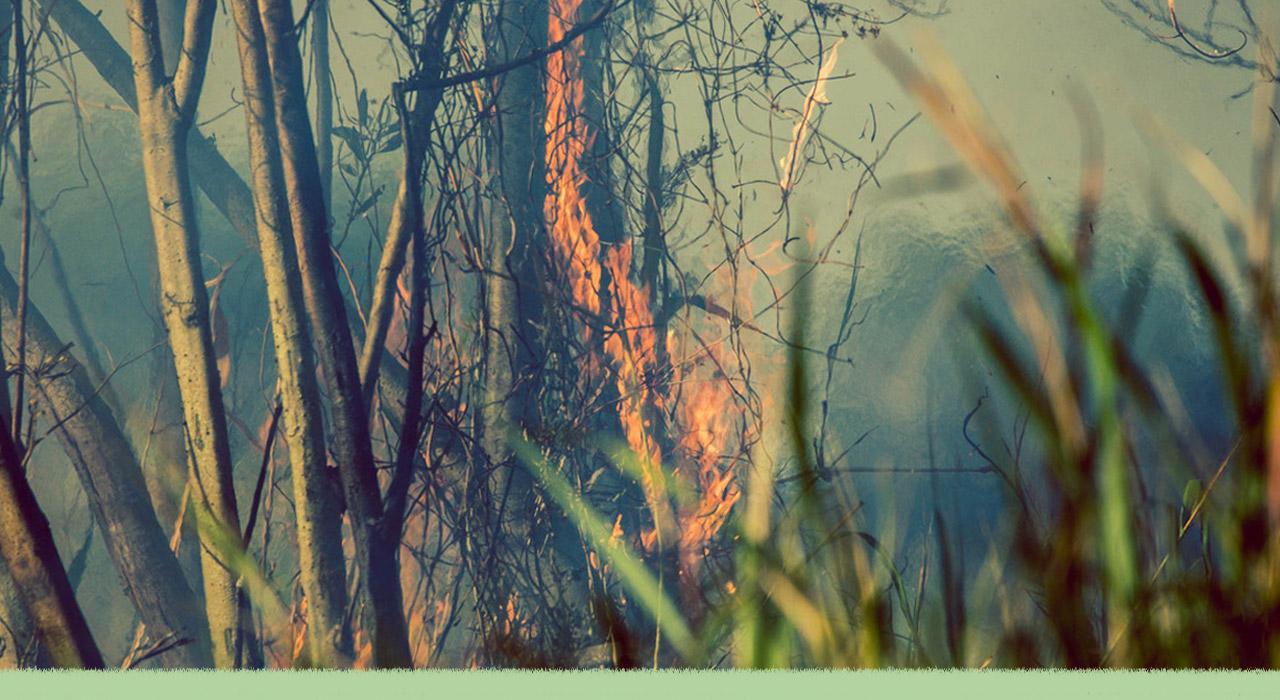 Qué está pasando con los incendios en las islas del Paraná