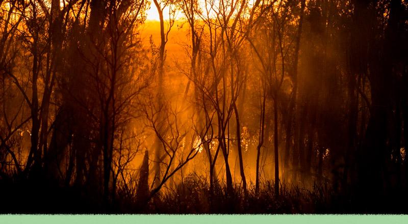 El Delta, la Amazonía, Australia: cuando el fuego refleja el accionar humano