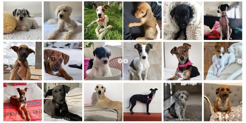 Efecto cuarentena: cómo aumentó la adopción de perros según una iniciativa argentina