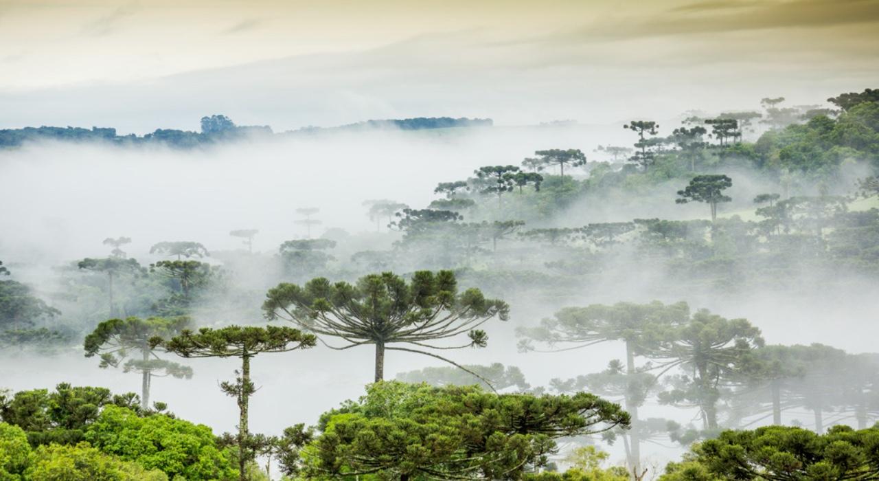 De la Amazonía colombiana al Bosque Atlántico argentino: un innovador acuerdo en favor del ambiente, las comunidades y el desarrollo económico