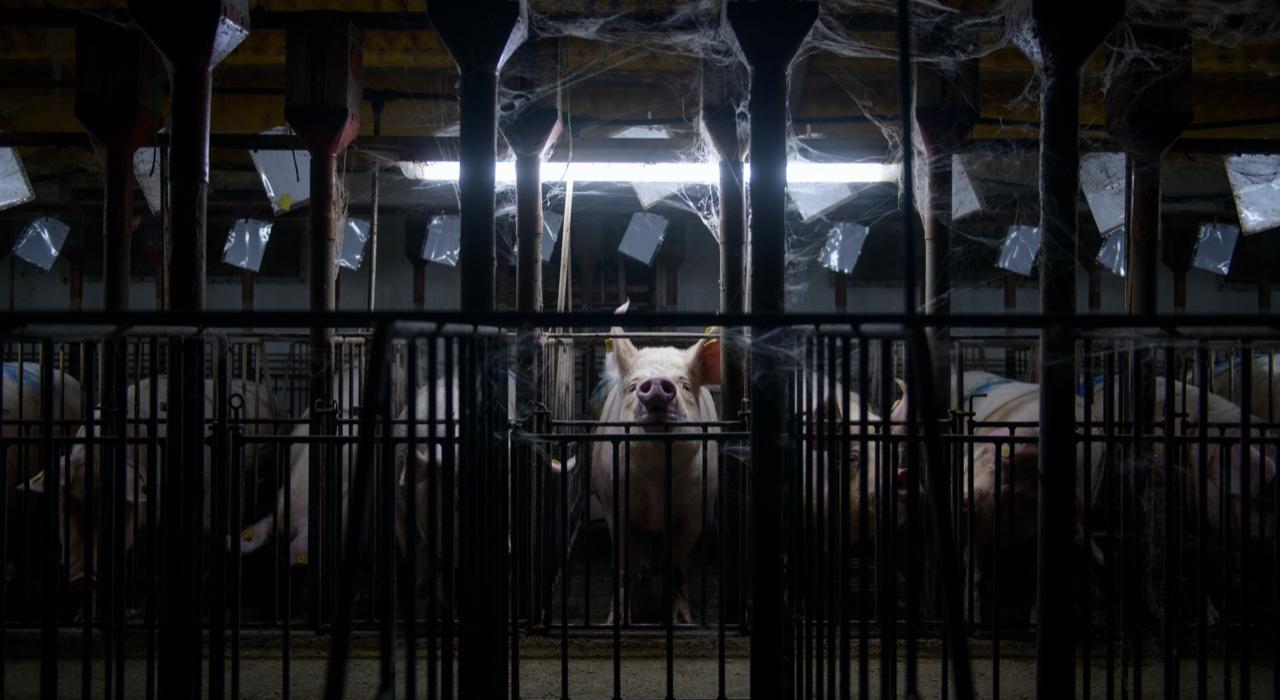 """El diagnóstico crudo del fotógrafo que revela la explotación del ganado: """"Ningún animal de la industria está en un estado de bienestar"""""""