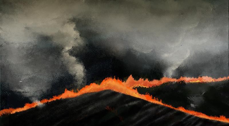 Cómo recuperar los ecosistemas afectados por los incendios