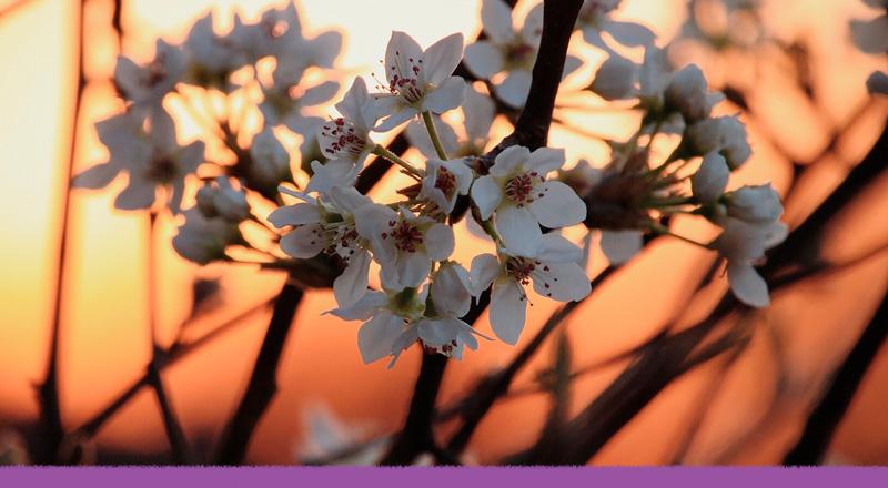 ¿Podemos volver a sentir el aroma de flores extintas por culpa del ser humano?
