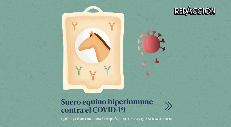 Cómo funciona el suero equino para tratar pacientes con COVID-19