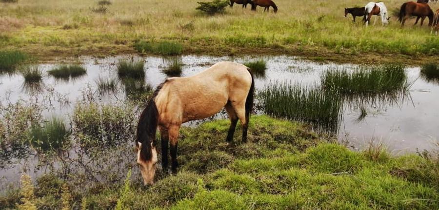 Un santuario para caballos que fueron explotados