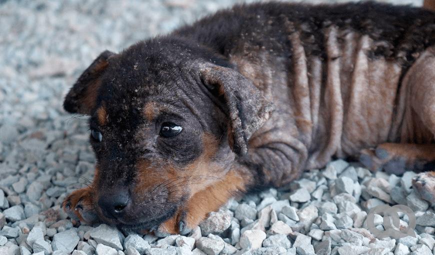 Cómo es el trabajo de los rescatistas que trabajan por la protección animal en Cuba