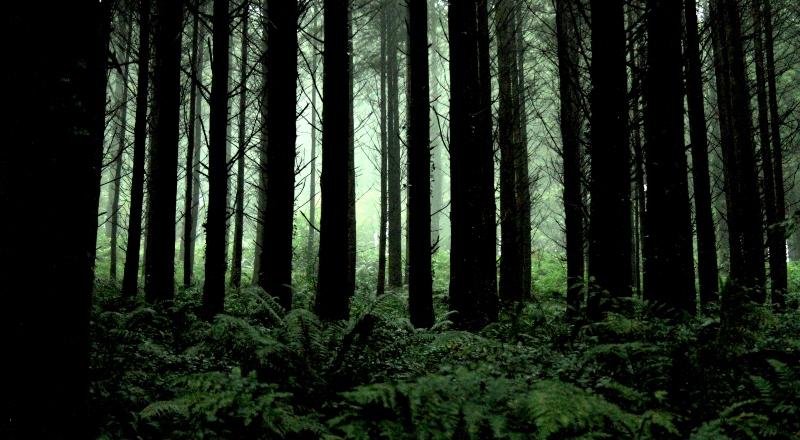 Cómo una empresa forestal logró alcanzar la carbono neutralidad