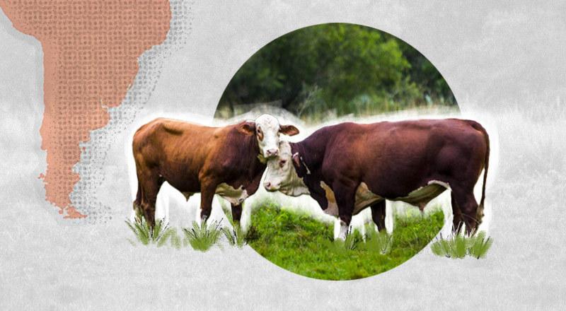 Cómo, por la presión de los consumidores, planean producir carne vacuna sustentable en Argentina