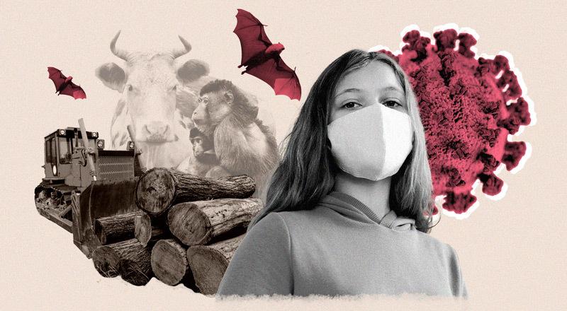 No es culpa del murciélago: la advertencia de la pandemia sobre el modelo de producción que nos sale carísimo (en salud y dinero)