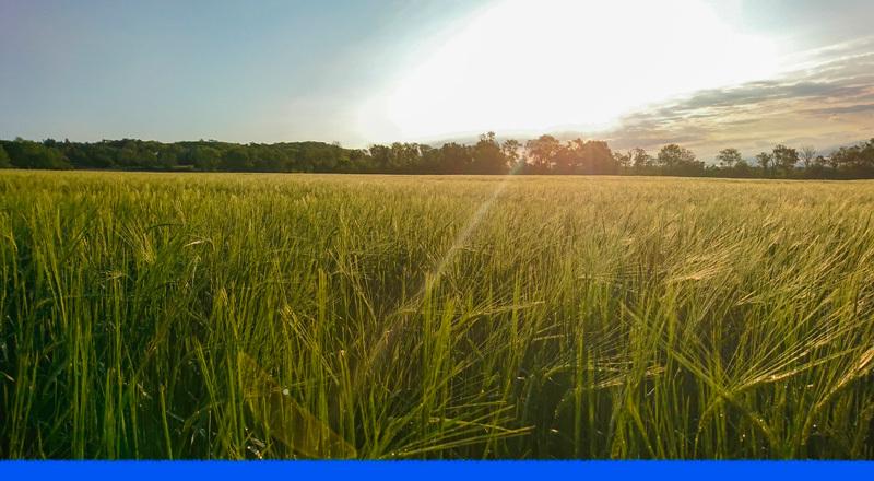 Ley de Biocombustibles: por qué es importante tratar la vinaza