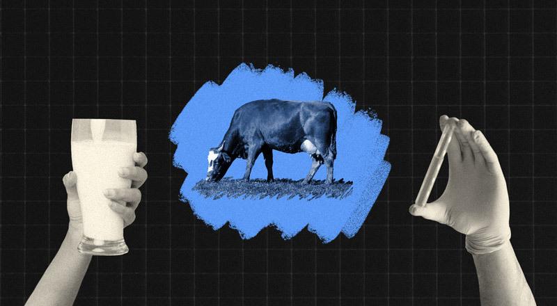 """La leche: por qué un alimento históricamente considerado """"esencial"""" es puesto en duda por algunos sectores"""