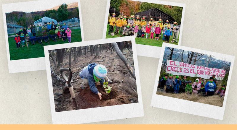 Cómo trabaja una escuela para reforestar el bosque en Chubut
