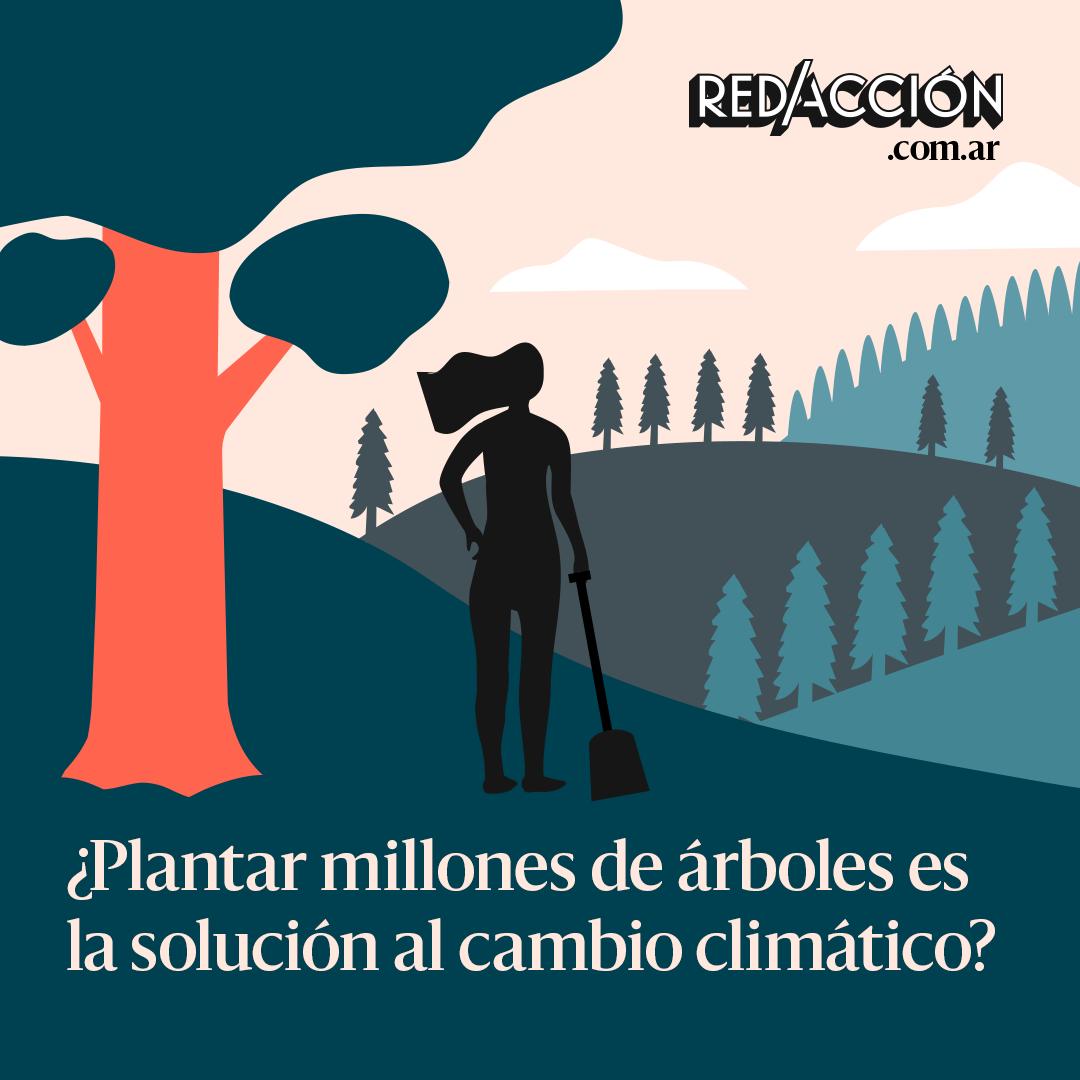 ¿Plantar millones de árboles es la solución al cambio climático? En realidad no es tan sencillo