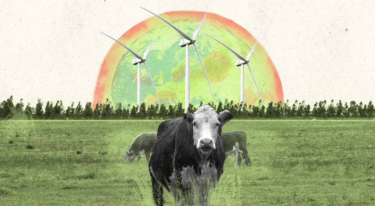 Vacas sobre pasturas, con molinos de fondo.